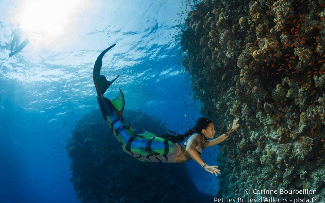 Séance découverte : Sirènes