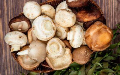Annonce – Contrôle champignons